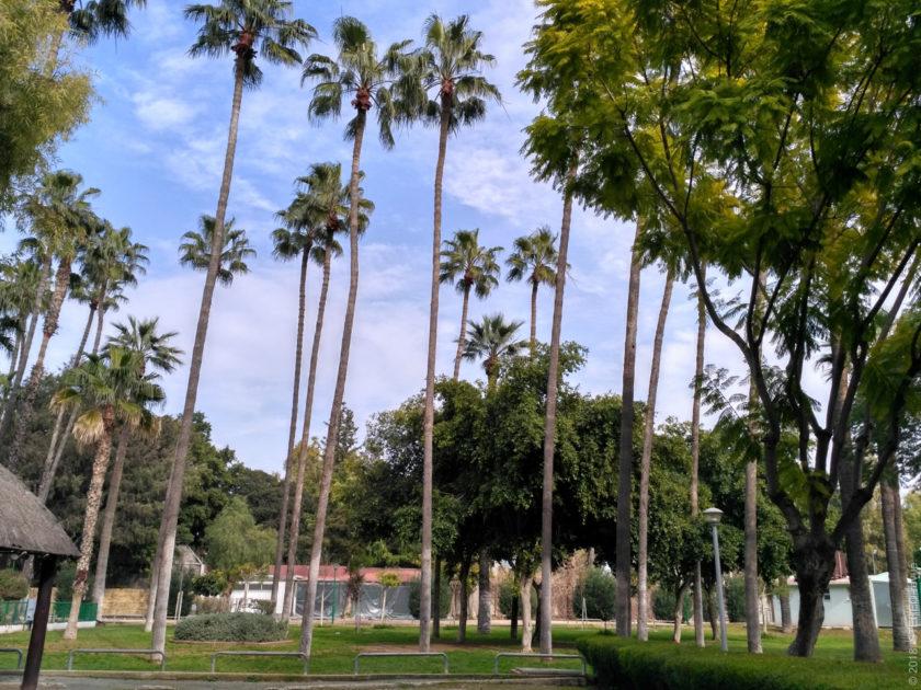 Ландшафт парка не особо отличается от обычного ландшафта города...