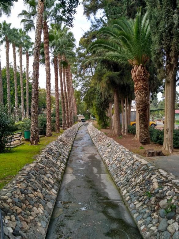 Два противоборствующих рода пальм на противоположных берегах канала в парке.