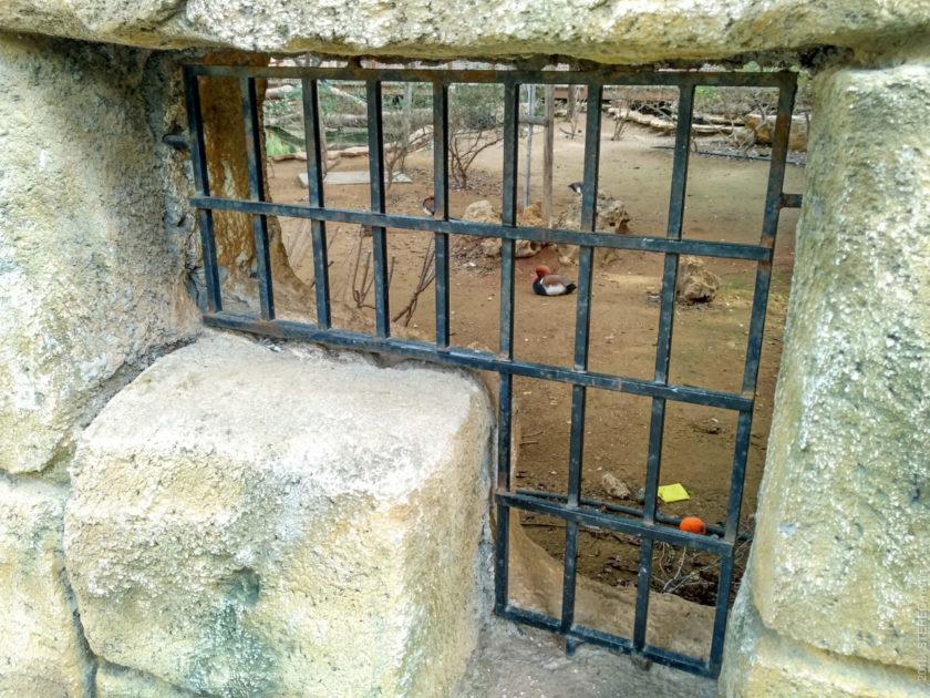 Муниципальный Зоопарк Лимасола. Говорят, он совсем неинтересный, так что вполне стоит сэкономить €5 на шаурму, например, а экспонаты посмотреть через окошко.