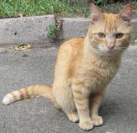 Red Cat 2